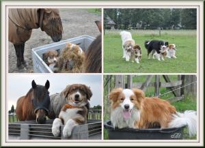 Verkleind20 juli 2011 Djay bij de paarden-collage